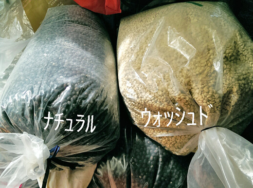 乾燥させたコーヒー生豆:ナチュラルとウォッシュド
