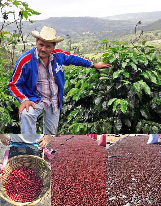 ニカラグア サンタフェ農園