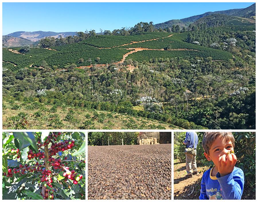 ブラジル ペドラ・メニーナ農園