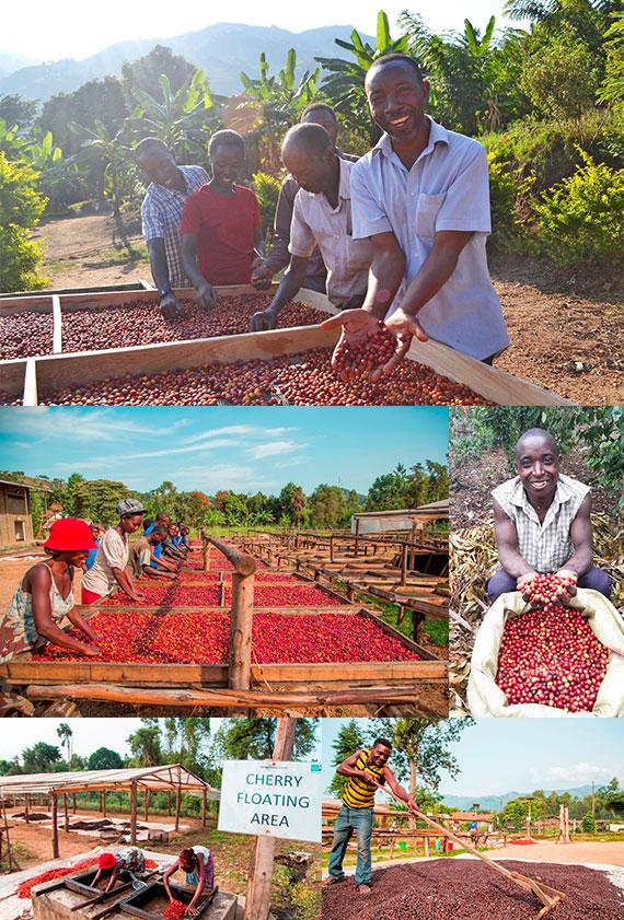 アフリカ ウガンダ共和国 バコンゾ族のコーヒー『ウガンダ アフリカンムーン』