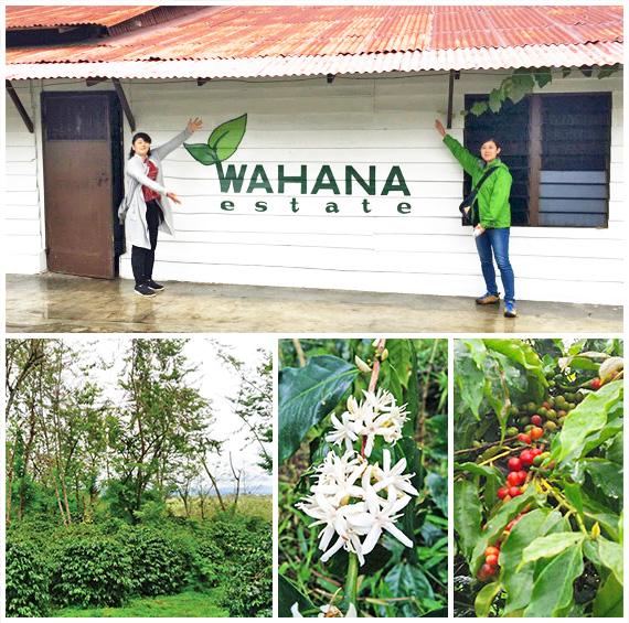 インドネシア・ワハナ農園