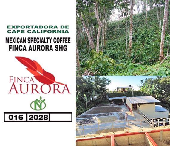 中米 メキシコ合衆国 オーロラ農園