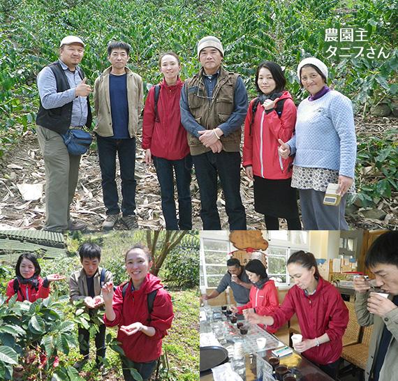 台湾 阿里山珈琲 走廊珈琲園(コリドー農園) ヤユヌ・エリア