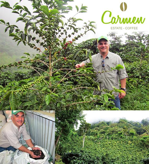 パナマ カルメン農園