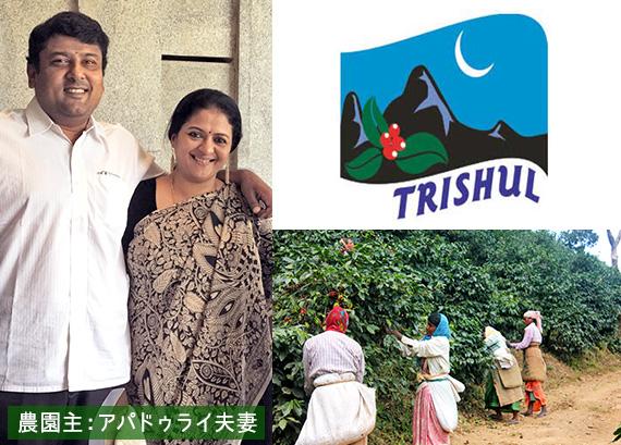 インド トリシューラ カラディカン農園 ハニー