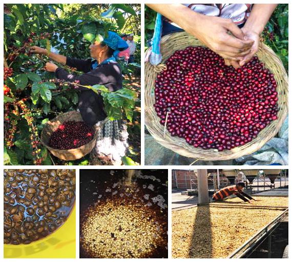 エルサルバドル ブエノスアイレス農園 〜カスカラティー・プロセス