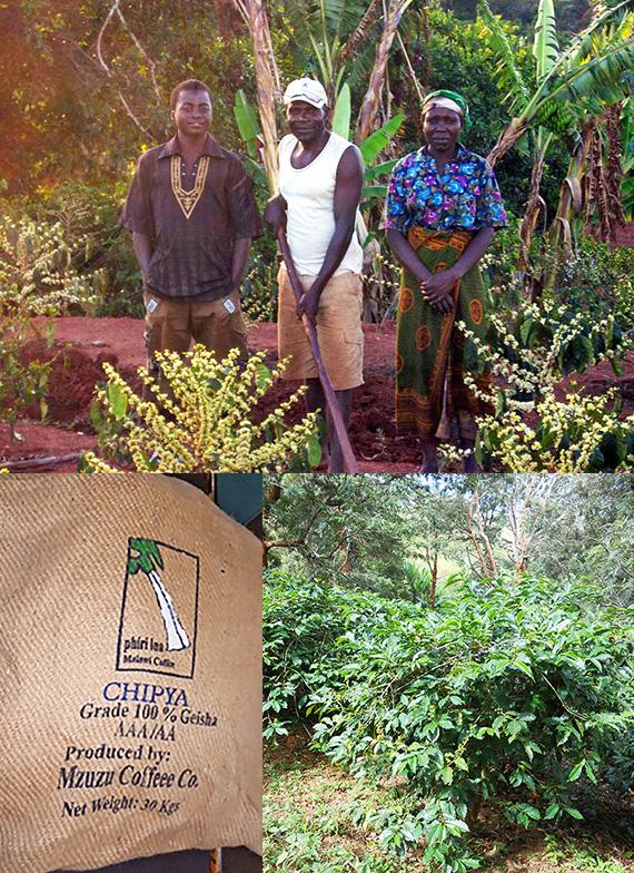 マラウイ ミスク農協 チプヤ村のコーヒー