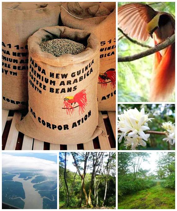 パプアニューギニア コセン農園 〜精霊の森のコーヒー