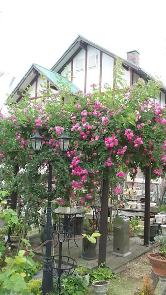 ガーデンのパーゴラがバラに包まれています