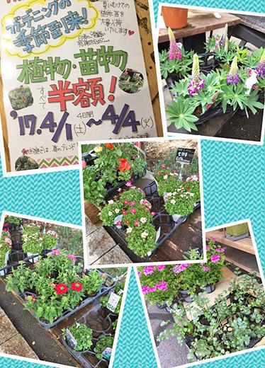 植物・苗物半額セール