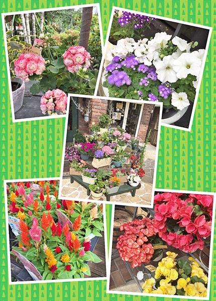 かわいいお花苗や鉢植えや鉢