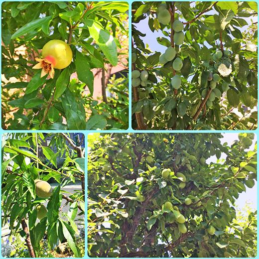南蛮屋果樹園『ザクロ、プルーン、アーモンド、カリンの実』