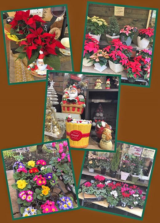 クリスマスのお花達