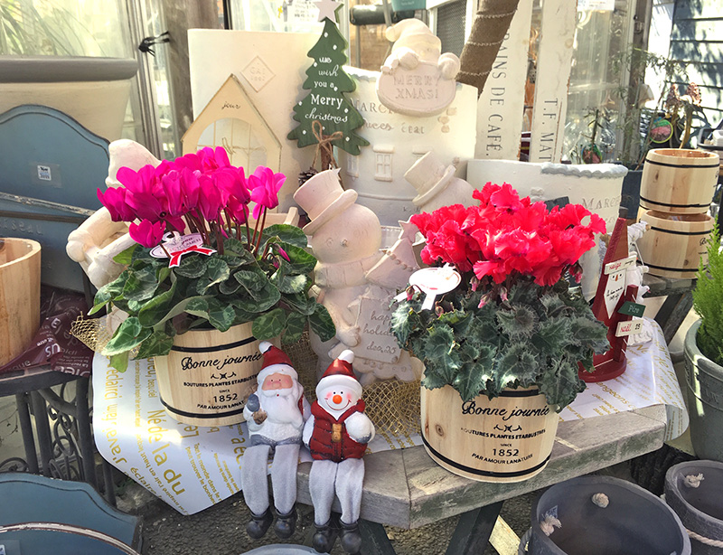 クリスマスのお花や植木鉢とかわいい人形達