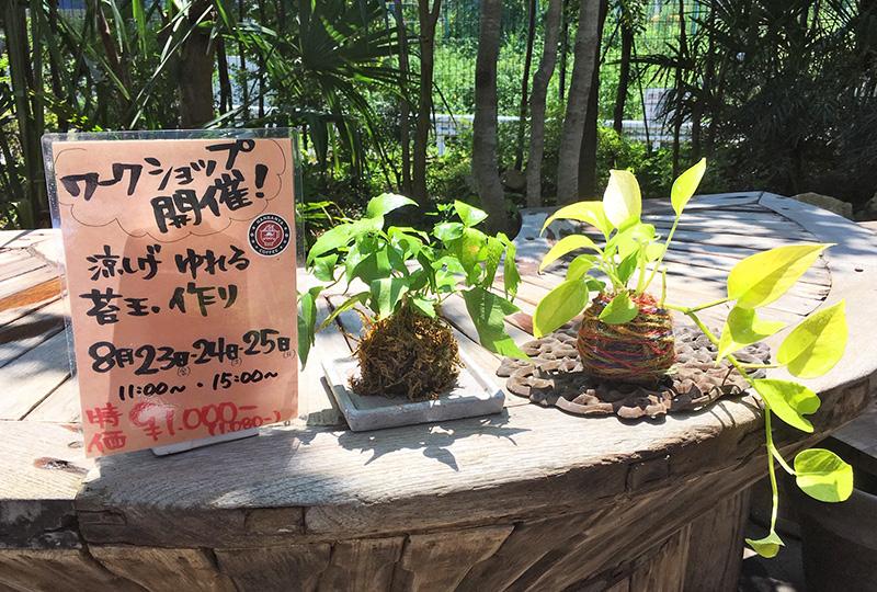 苔玉作りワークショップ