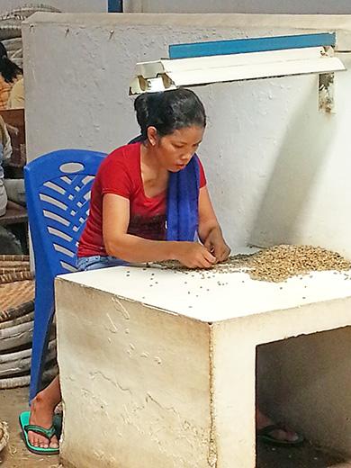 コーヒー生豆のハンドピック