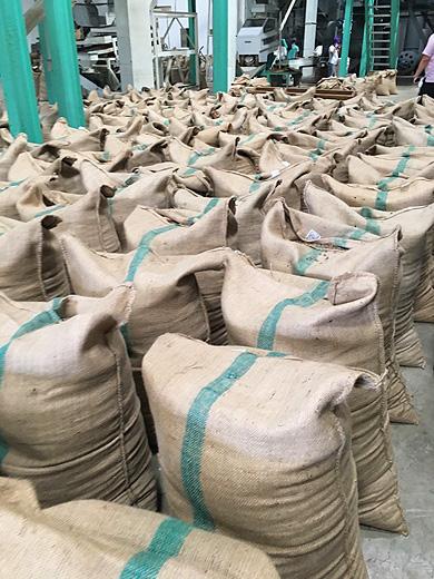 インドネシア メダンにあるサリマクムール社のコーヒー工場見学
