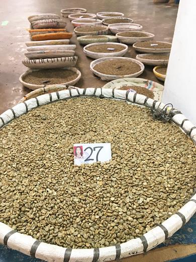 インドネシア サリマクムール社 コーヒー生豆のハンドピック