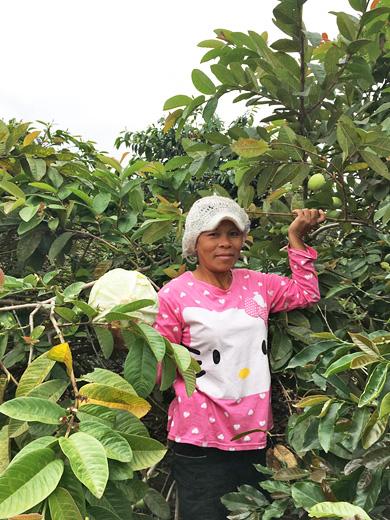 インドネシア リントン地区のコーヒー小農家にて