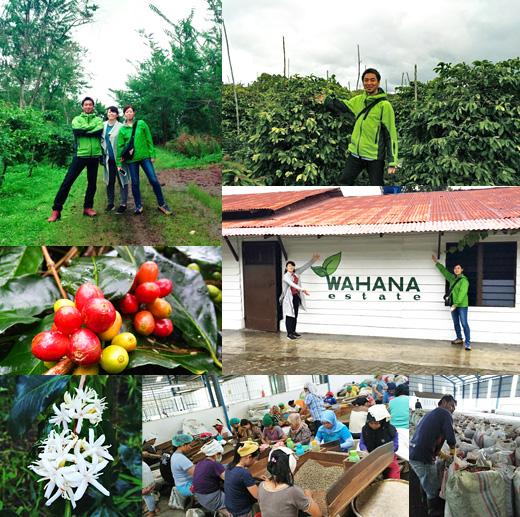 インドネシア コーヒー豆 産地訪問 2016